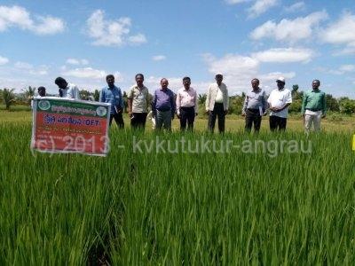 2.Hon_ble_VC__ANGRAU-Dr.V.Damodar_Naidu_garu__visited_demo_plots_of_OFT_on_NLR_20104_Rice.jpg